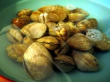 th_clams 004